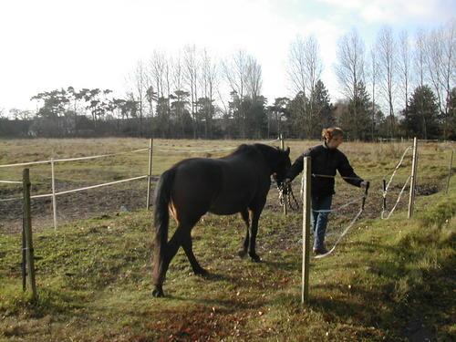 Horse caring - analysis